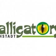 Alligators verstärken Verteidigung