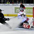 Ice Tigers feiern knappen Heimsieg – Erfolgreiche Revanche gegen Haie