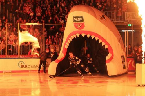 Einlauf der Haie